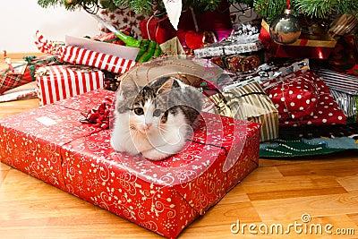 Kitten under christmas tree