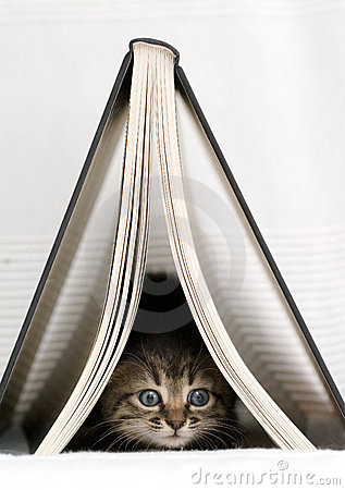 Kitten underneath book