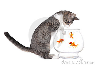Kitten Watching Fish Swim With Paws on Aquarium