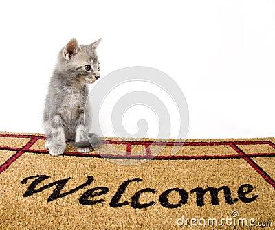 Kitten and welcome mat