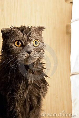 Kitten is wet