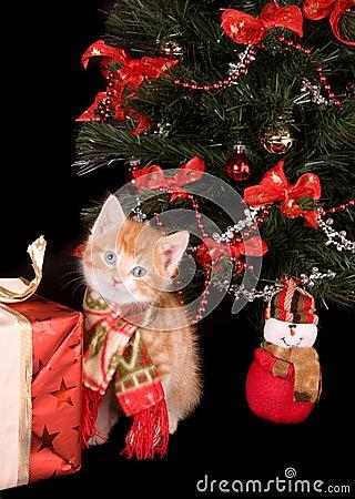 Free Kitten With Shawl Stock Photos - 7238703