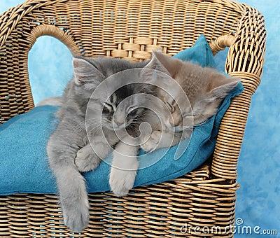 Kittens asleep on a chair