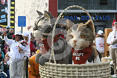 Kittens in a Basket Editorial Stock Image