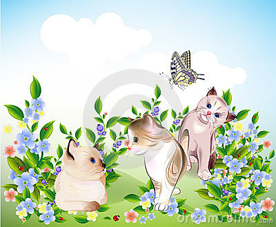 Kittens and butterfly