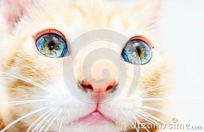 Kittens eyes