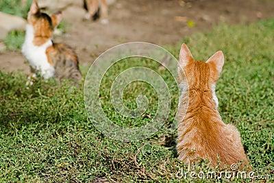 Kittens on the grass