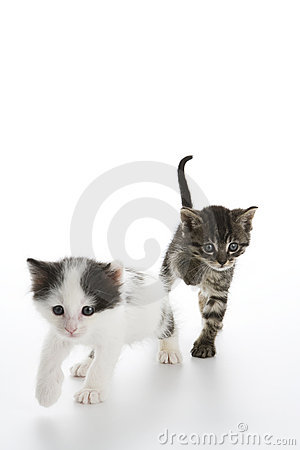 Kittens jumping toward camera