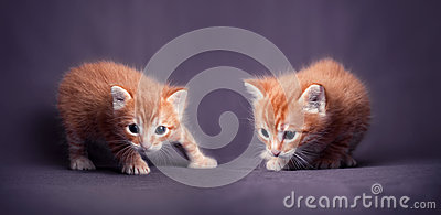 Kittens portrait