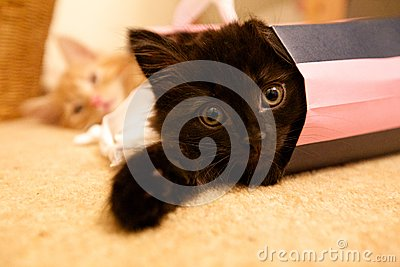 Kittens in Shopping Bag