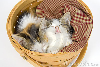 Beautiful Kittens Sleeping In A Basket Stock Photo, Picture And ...