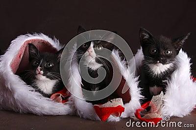 Kittens in socks