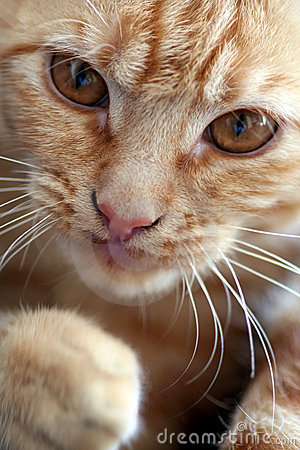 Free Kitty Stock Images - 3502384