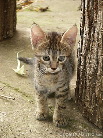 Free Kitty Royalty Free Stock Photo - 44855