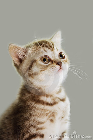 Free Kitty Royalty Free Stock Image - 5980046