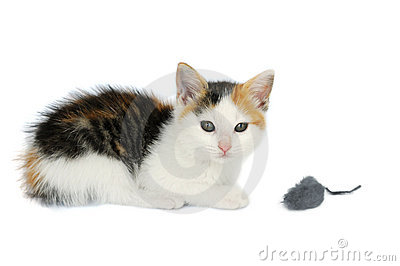 Kitty Cat With Mouse Toy