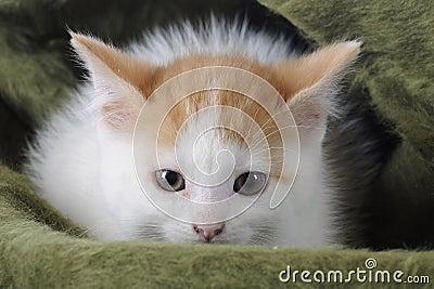 Kitty dans une couverture