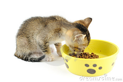 Kitty eating dry food