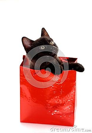 Free Kitty Gift Royalty Free Stock Photos - 7428938