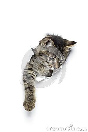 Free Kitty In Hole Royalty Free Stock Photos - 77732758