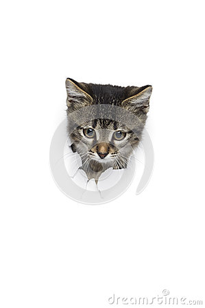 Free Kitty In Hole Stock Photo - 86174180