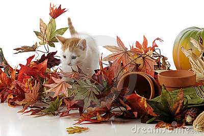 Kitty among Leaves