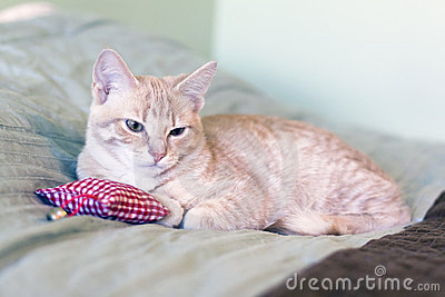 Kitty with pillow