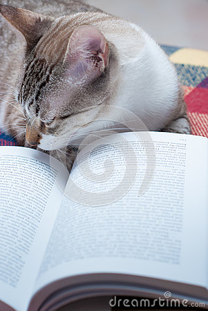Kitty reading