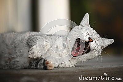 Kitty rockin