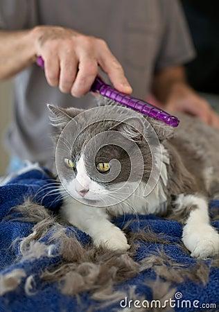 Kitty's Home Haircut