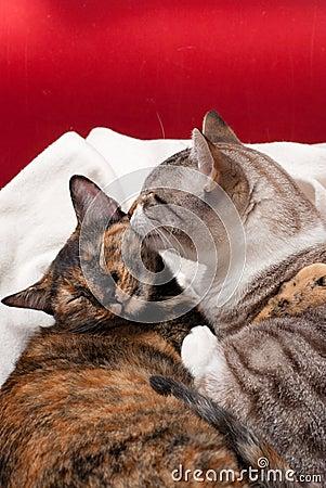 Kitty tenderness