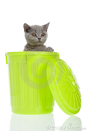 Kitty in a trashcan