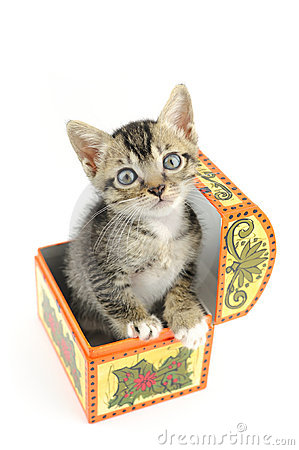 Kitty in treasure box