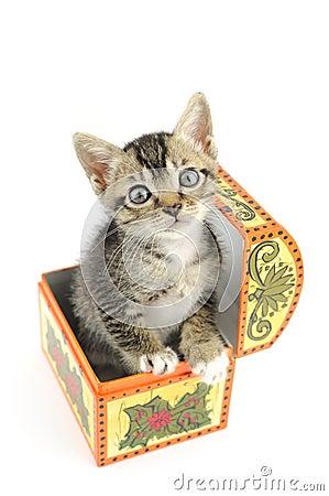 Kitty in treasure box