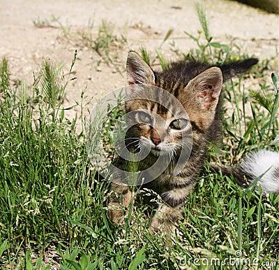 Kitty walking
