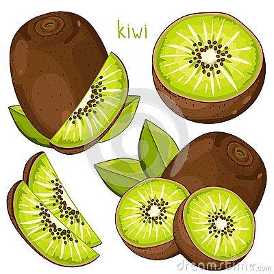 Free Kiwi , Vector. Stock Images - 65328644