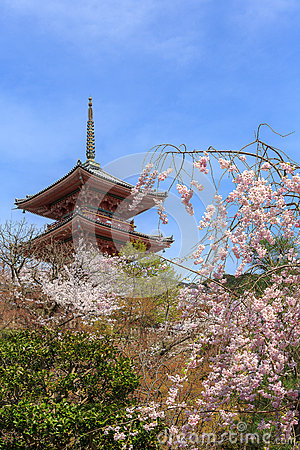 Kiyomizu temple and cherry blossom in Kyoto