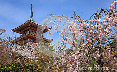 Kiyomizu temple and cherry blossom in Kyoto