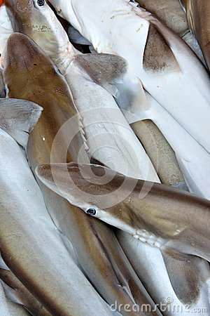 Kleine Haifische