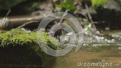 Kleine stroom in een bos stock footage