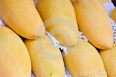 Kleur en vorm van mango s
