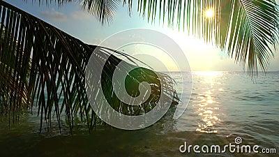 Kleurrijk tropisch landschap met palmtakken in de oceaangolven stock video
