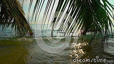 Kleurrijk tropisch landschap met palmtakken in de oceaangolven stock videobeelden