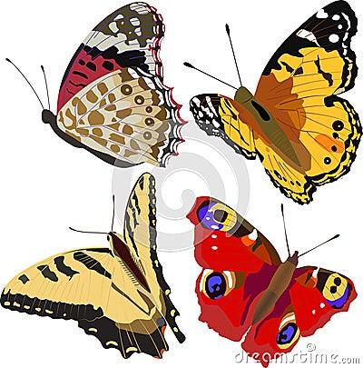 Kleurrijke vlinders