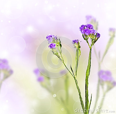 Knapweed on a blurred background