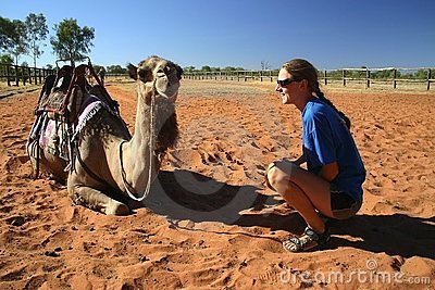 Kneeling by the camel
