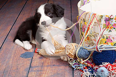 Knitting puppy