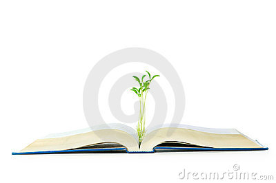 Knowledge concept with books and seedling
