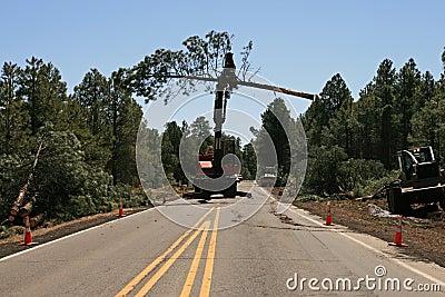 Knuckleboom Loader moves tree