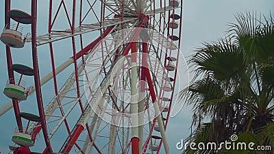 Koło Ferrisa na niebie i palmach zbiory wideo
